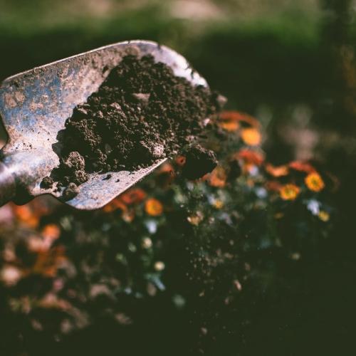 Jardinagem na Quarentena Ganhar Dinheiro em Casa Aiquara