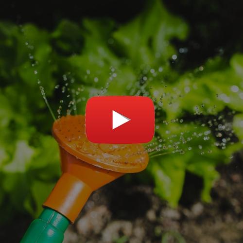 Jardinagem na Quarentena Ganhar Dinheiro em Casa